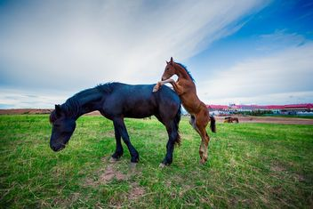 two horses in the field - image #198581 gratis