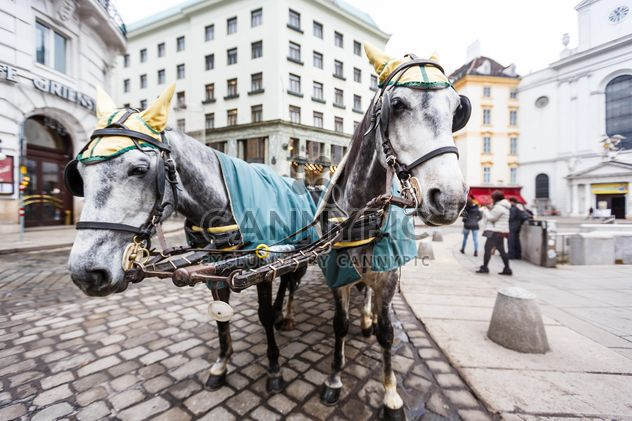 city tours on horseback - image #198611 gratis