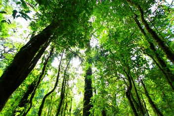 Trees in forest at sunny day - image #199021 gratis
