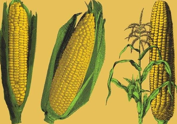 Engraved Corn Illustrations - vector #200551 gratis