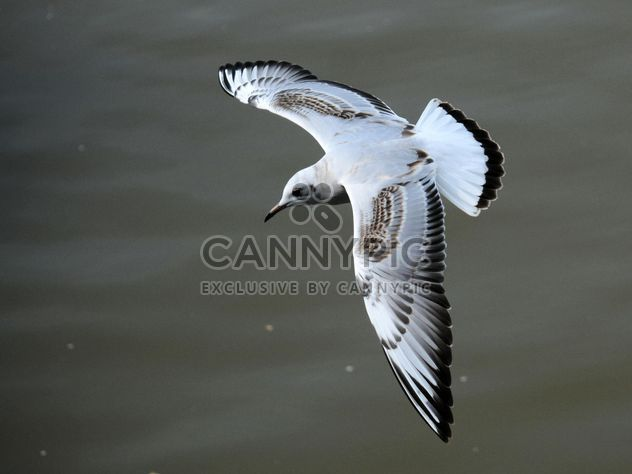 Seagull flying over sea - Free image #201431