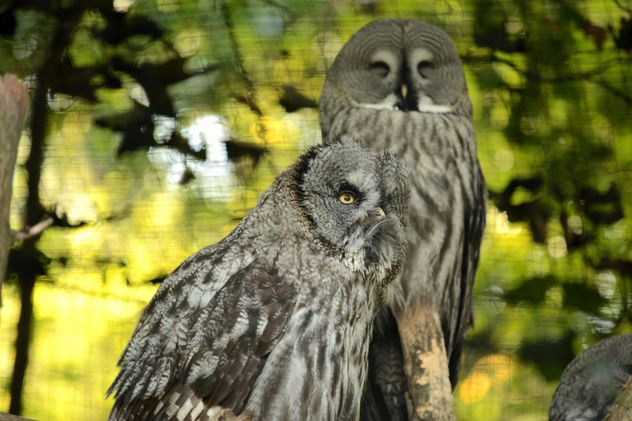 Gray owls on the tree - image #201441 gratis