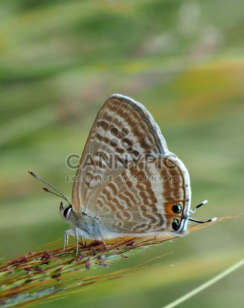 Grey butterfly - Free image #201511
