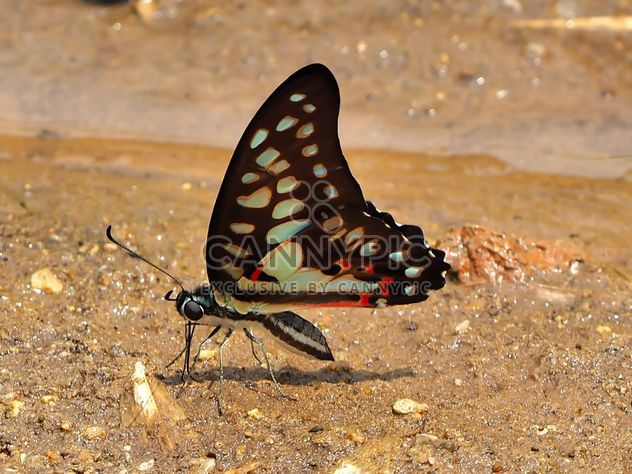Black-blue butterfly - Free image #201551