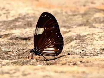 Brown butterfly - image #201571 gratis