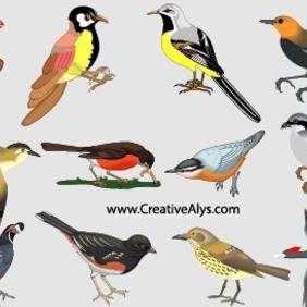 Beautiful Realistic Birds In Vector - vector gratuit #202911