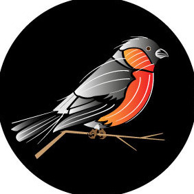 Bird Vector Illustration - Free vector #208711