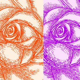 Rose Blossom - Free vector #217591