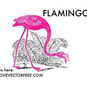 Pink Flamingo - Free vector #221061