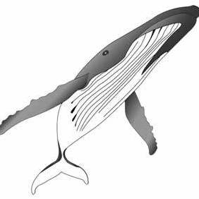 Gray Humpback Whale - Kostenloses vector #222441