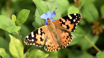 Butterfly close-up - Free image #225331