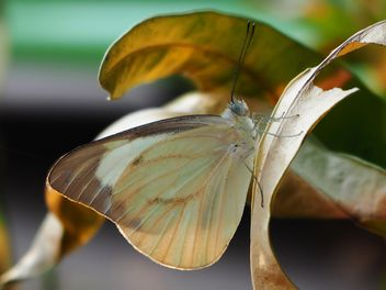 Butterfly close-up - Free image #225361