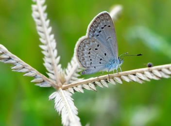 Butterfly close-up - Free image #225371