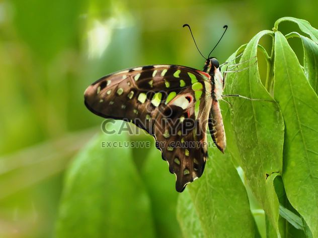 Close-up de borboleta - Free image #225401