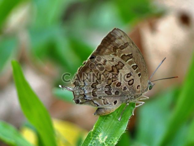 Butterfly close-up - Free image #225411