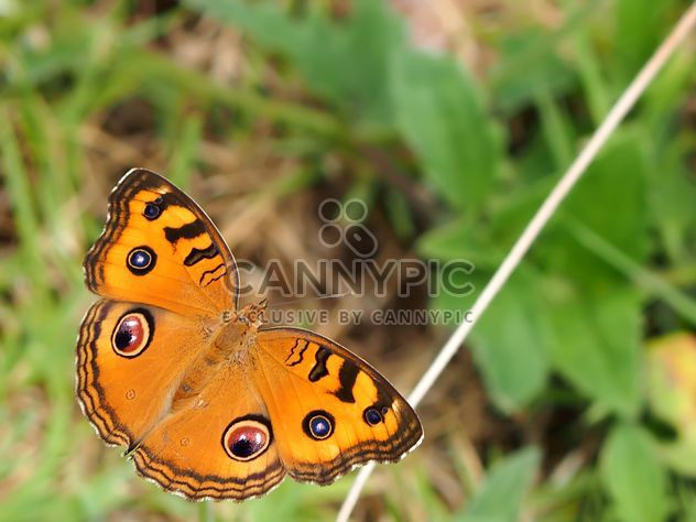 Butterfly close-up - Free image #225421