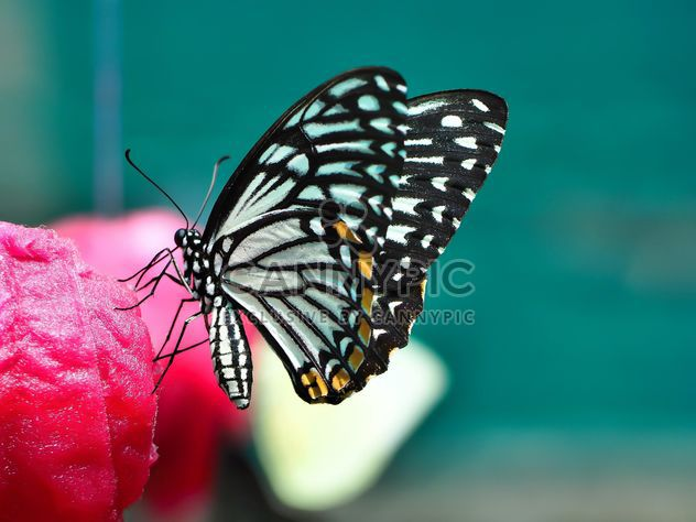 Butterfly close-up - Free image #225441