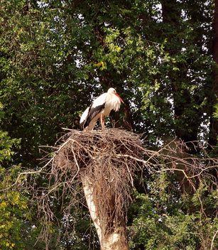 Storks - image #229361 gratis