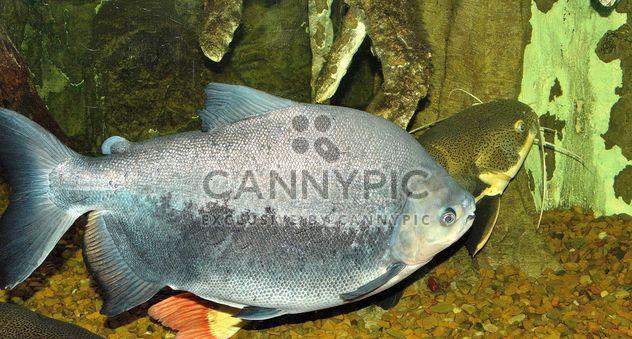 Aquarium - Free image #229411