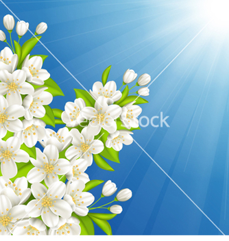 Free blossoming cherry vector - Free vector #238851