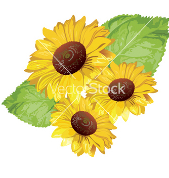 Free sunflower vector - vector #269791 gratis