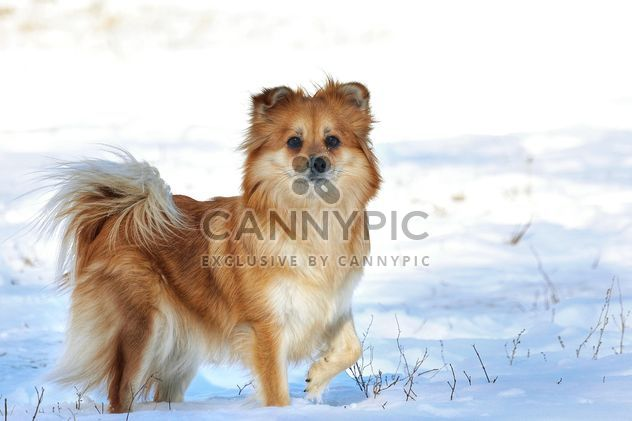 Dog in winter field - Free image #271951