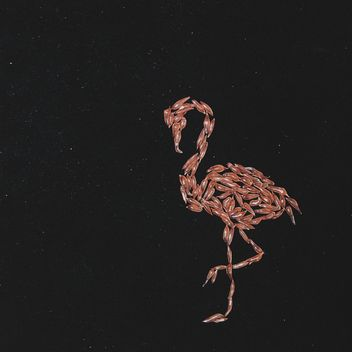 flamingo made from the pulp of grapefruit on a black background - image gratuit #272251