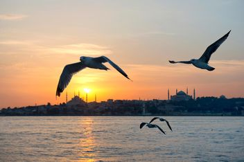 the flying seagulls at sunset - image gratuit #272521
