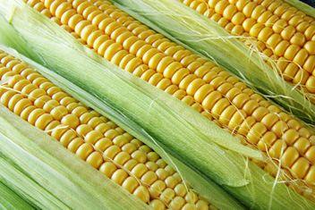 Ripe corn cobs - Free image #272591