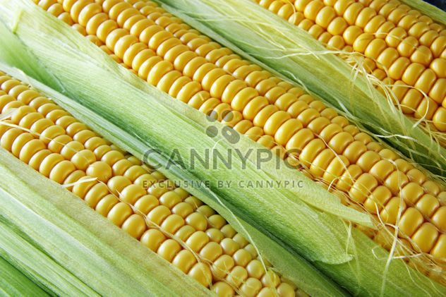 Спелый кукурузные початки - бесплатный image #272591