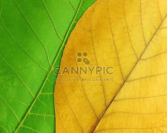 Зеленые и желтые листья - бесплатный image #272611