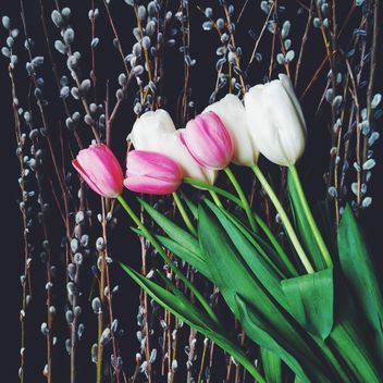 Bouquet of tulips - Free image #272941