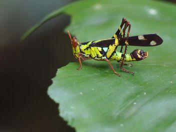 Grasshopper - image gratuit #273121