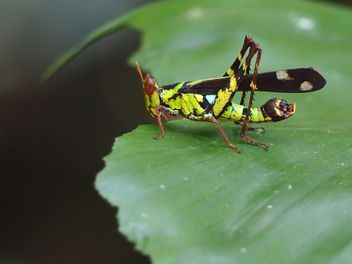 Grasshopper - Free image #273121