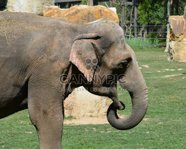 Elephant in the Zoo - Free image #274961