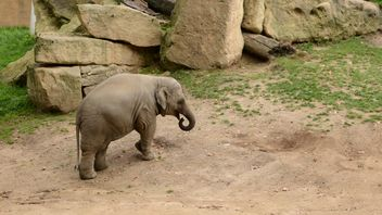 Elephant in the Zoo - image gratuit(e) #274991