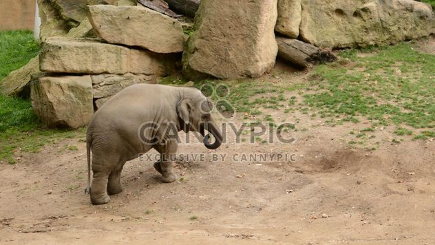 Elephant in the Zoo - Free image #274991