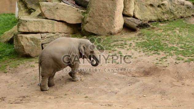 Elefante en el zoológico - image #274991 gratis