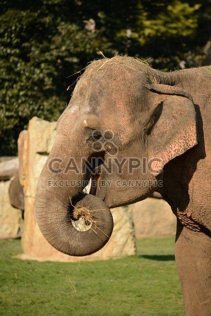 Слон в зоопарке - Free image #275001