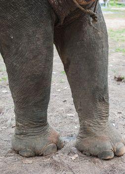 Elephant feet - бесплатный image #275011