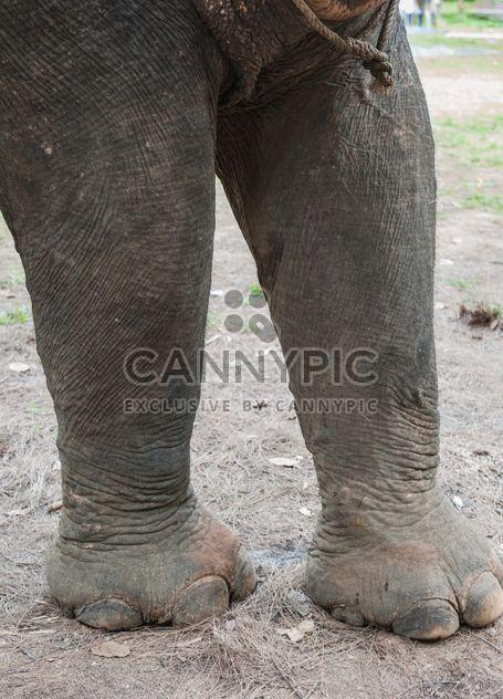 Pieds d'éléphant - image gratuit(e) #275011