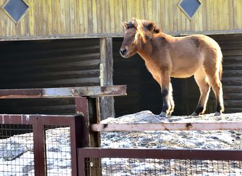 Wild horse in th Zoo - Free image #275031