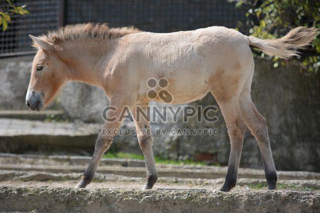 Brown horse - Free image #275051