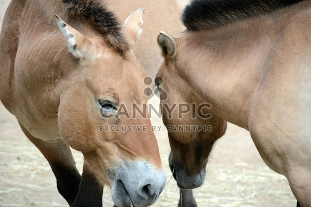 Brown horse - Free image #275061