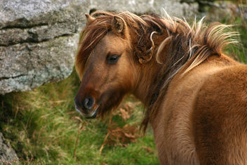 bad hair day - image #275371 gratis