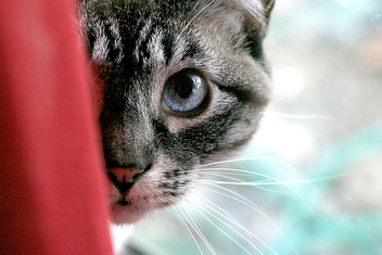 Cat - image #275431 gratis