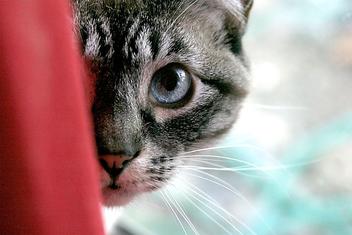 Cat - Free image #275431