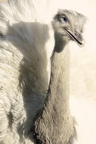 miss avestruz - Free image #275571