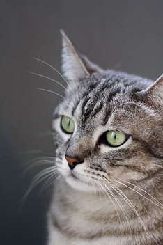 Cat - Free image #275691