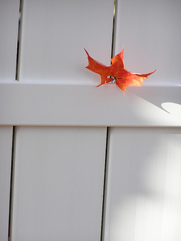leaf on a white fence - image #275841 gratis